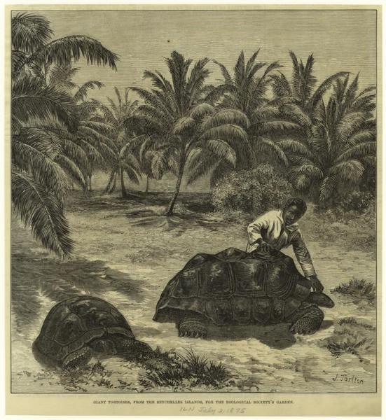 vente tortue de terre